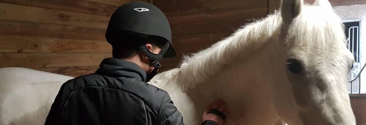 Hippologie Equitation Une option pour chaque filière